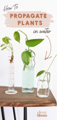 How to Root Plant Cuttings in Water – Clever Bloom – House Plant Crafts & DIY Water Plants Indoor, Indoor Garden, Potted Plants, Garden Plants, House Plants, Vegetable Garden, Begonia, Flower Pot Design, Plant Crafts
