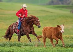 Hey I'm Caleb. I work cattle at the ranch and I'm pretty quite. Western Riding, Horse Riding, Riding Gear, Equestrian Outfits, Equestrian Style, Equestrian Fashion, All The Pretty Horses, Beautiful Horses, Cutting Horses
