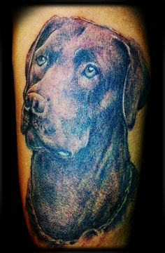 Chocolate lab portrait. TATTOO by CRACKER @225cracker