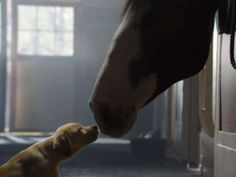 Watch: Puppy love will melt hearts in Budweiser ad