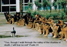 Tho I walk thru the valley of the shadow of death...