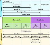 Autonomic Pharmacology