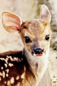 baby deer | Tumblr