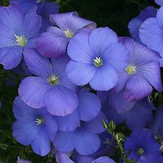 Beautiful Home And Garden, Flora, Plants, Purple, Garden, Outdoor, Flora Flowers, Nature, Blue Flowers