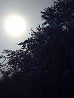 Nature, sun, winter