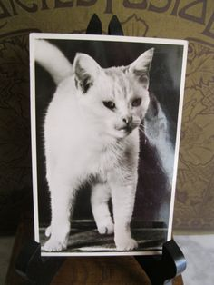 SALE  Antique Postcard. From my album Cats and by grandma62