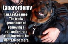 My rottie...I think rotts are the sweetest, most gentle breed. Love our rotts.