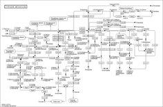 KEGG PATHWAY: Tyrosine metabolism - Reference pathway