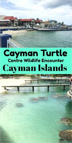 Cayman Turtle Centre island wildlife encounter cayman islands - formerly known as Cayman Turtle Farm on Grand Cayman, this is the cruise excursion we took with kids. Cruise Excursions, Cruise Travel, Cruise Vacation, Vacation Destinations, Travel Usa, Globe Travel, Dream Vacations, Caribbean Resort, Caribbean Vacations