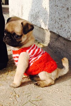 This cute dog is wearing a sweater!!!