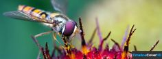 Insect Timeline Cover 850x315 Facebook Covers - Timeline Cover HD