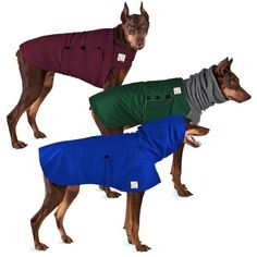 Waterproof Rain Coat and Winter Coat plus a warm Tummy Warmer for Doberman Pinschers.