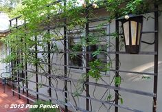 Large Scale Decorative Iron Trellis For A House Wall Exterior Large Metal Trellis Curved Pergola, Pergola Attached To House, Cheap Pergola, Wooden Pergola, Metal Pergola, Pergola Kits, Pergola Ideas, Outdoor Ideas, Gardens