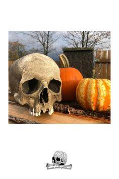 Original skull replica for sale #skull #skullreplica #bone #skeleton #calavera #tattoo #inked #skullart #photography Calavera Tattoo, Skull Decor, Halloween Skull, Skull And Bones, Skeleton, Photography, Photograph, Fotografie, Skeletons