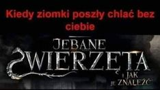 Nalu, Poland, I Am Awesome, Neon Signs, Humor, Wattpad, Memes, Funny, Movie Posters