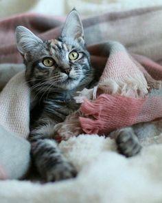 .kitty cat so sweet.