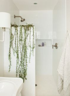 beth kooby design Atop the shower stall. If your bathroom has a partial wall separating the shower from the rest of the space, consider positioning a vine-like or trailing plant on top, where it can drape down the wall. Try a spider plant or the more unusual-looking Crescent succulent vine, shown here.