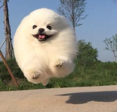 i literally post dogs and puppies thats it Happy Animals, Animals And Pets, Cute Animals, Cute Puppies, Cute Dogs, Dogs And Puppies, Doggies, Fluffy Animals, Cute Creatures