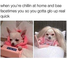 Time To Look Good ?     http://timer.onlineclock.net/timers/30seconds/  #Relationships #Dating #Dog #Dogs #DogLovers #Pets #Animals #OnlineDating #Love #Romance #FidoFriday #Chihuahua #Chihuahuas #AnimalLovers #Puppy #Puppies #DogBreeder #AnimalLovers