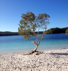 Lake McKenzie in the springtime as captured by Jodi C  #fraserisland #queensland #australia www.fraserisland.net