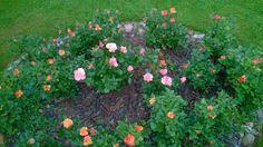 #kesä #piha #Puruvesi  #Punkaharju #Suomi #houseforsale #Finland #summer #garden