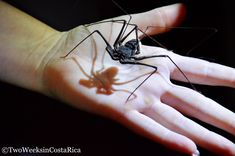Learn some fascinating facts about the creepy crawlies that come out after dark on the Tracie the Bug Lady tour in Drake Bay. What to expect on the tour and how to book it.