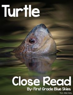 First Grade Blue Skies: Turtle Close Read FREEBIE and School's Out! Survival Pack