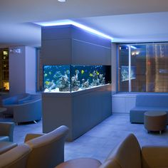 I really want a large, beautiful aquarium in my house, but I also want someone else to keep it clean and pretty lol!