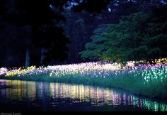 Longwood Gardens -- Light installations by British lighting artist Bruce Munro ... would love to see this!