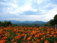 North Carolina, photo by Michael Bernhardt