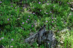 Tzoumerka, Greece More Photos, Greece, Creatures, City, Places, Nature, Greece Country, Naturaleza, Cities