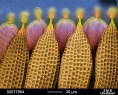 Butterfly wing segments. (Photo: Daniel Mathys/FEI)