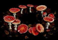 A fairy ring, also known as fairy circle, elf circle, elf ring or pixie ring, is a naturally occurring ring or arc of mushrooms.