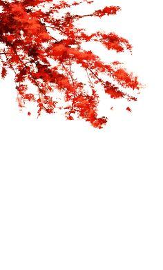 红色花枝5