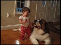 This dog helping a baby achieve her dream. | 50 Of The Most Important Dog GIFs Of All Time
