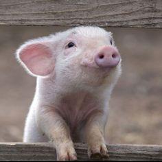 Piggy! He looks so happy!