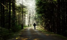 New free stock photo of road, person, forest Beautiful Streets, Photoshop Cs5, Free Stock Photos, Country Roads, Concrete, Trees, Image, Wood Illustrations, Wood