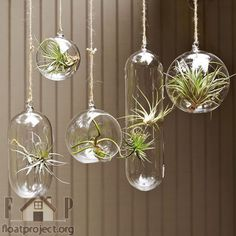 A handing glass planter is a great way to bring more life to your contemporary living room. You can hang it somewhere near a door or in front of a window. Your guests will definitely be impressed by this creative planter.