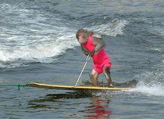 Monkey (1), Water Ski (4), Animals (200)450 x 327 | 31.3 KB | www.tecacentre.net