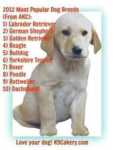 """Most popular dog breeds in Good to see that big dogs are still """"in""""! Big Dogs, Cute Dogs, Dog Breeds Pictures, Dog Breeds List, Most Popular Dog Breeds, Dachshund Love, Losing A Dog, Dog Quotes, Rottweiler"""