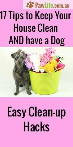 Home Cleaning 170362798388285827 - It's easy to keep your home clean and fresh while having a dog inside with my 17 tips to keep your house clean and have a dog will have your home in tip-top shape. Source by spresser Dog Cleaning, Deep Cleaning Tips, Toilet Cleaning, House Cleaning Tips, Spring Cleaning, Cleaning Hacks, Cleaning Products, All You Need Is, Homemade Toilet Cleaner
