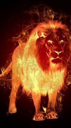 Search free fire Ringtones and Wallpapers on Zedge and personalize your phone to suit you. Lion Wallpaper, Animal Wallpaper, Lion Of Judah Jesus, Fire Lion, Animal Masks For Kids, Lions Live, Panther Cat, Lion Photography, Wolf Artwork