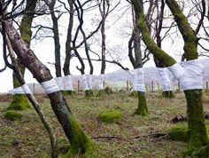bandaged trees - Google Search