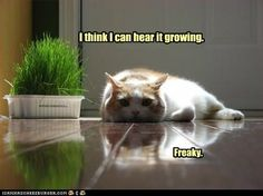 funny cat pictures - I should probably move.