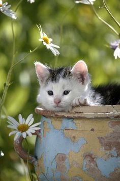 Kitty Loves Me! Kitty Loves Me Not! Kitty Loves Me! Pretty Cats, Beautiful Cats, Animals Beautiful, Cute Kittens, Cats And Kittens, I Love Cats, Crazy Cats, Baby Animals, Cute Animals