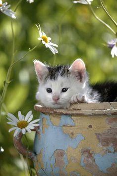Peeking out of a crock-sweet kitten
