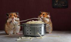 La mignonne Invasion des Hamsters de Elena Eremina (5)