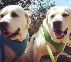 🐾😃 Let me tell you about my best friend! #zendogsbernieandben #dogzenergy #zendog #dogs #dogsofinstagram #puppies #dogfriendly #dog #cute #animals #pets #adorable #friend #fun #dogogram #instapuppy #puppiesofinstagram #lajolla #springshere #spring #besttimeoftheyear #springrtime #springinlajolla #springrinsandiego #summeriscoming #yayspring #lajollalocals #sandiegoconnection #sdlocals - posted by DogZenergy  https://www.instagram.com/dogzenergy. See more post on La Jolla at…