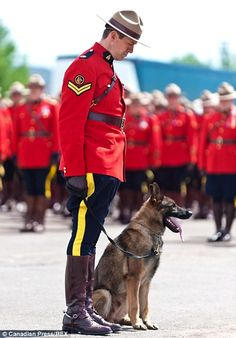 During the funeral procession in Moncton, Canada, Danny could be heard whimpering by the side of the casket of Mountie Constable Dave Ross. Canadian Things, I Am Canadian, Canadian History, Dave Ross, Dog Crying, Ontario, Canada Eh, Canada Memes, War Dogs