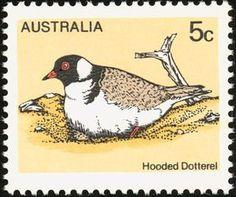 Hooded Dotterel (Thinornis rubricollis)
